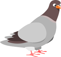 Pigeon.png